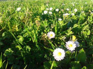 Primavera a Mallorca